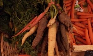 carottes anciennes