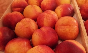 nectarines jaunes épicerie paysanne